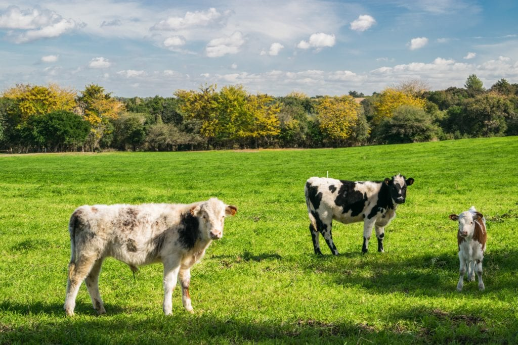 Marcella goes from dairy farm to finance